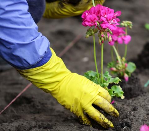 Жители Владивостока увидят больше цветочных клумб в городе