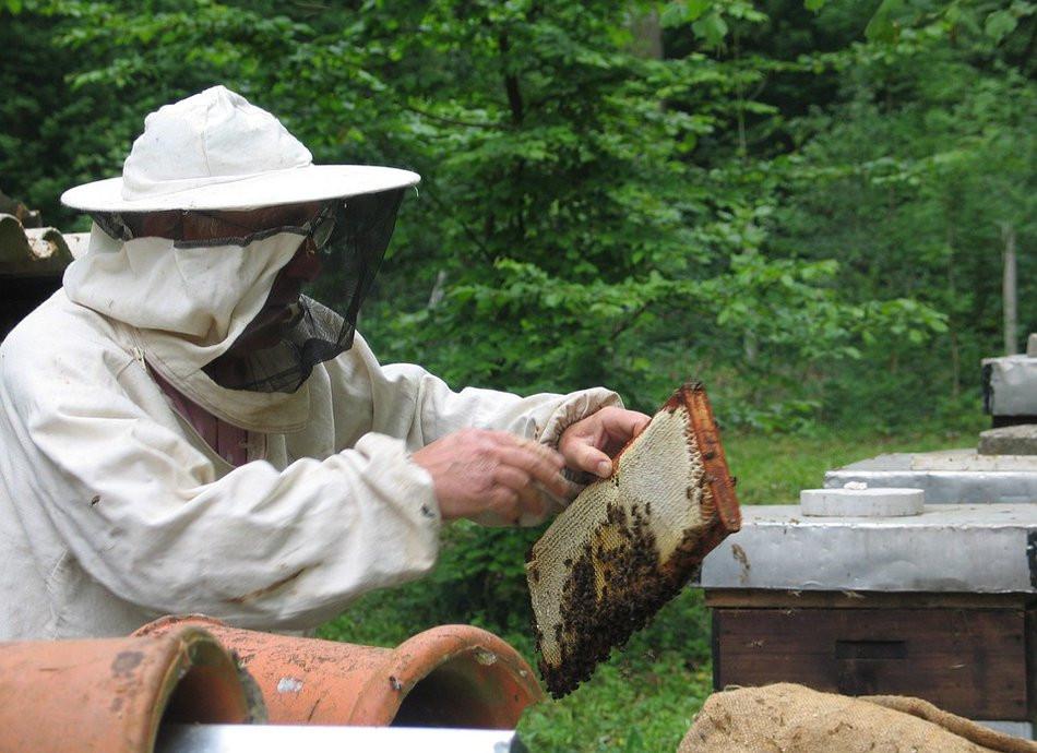 Приморскую пчелу увековечили в Анучино
