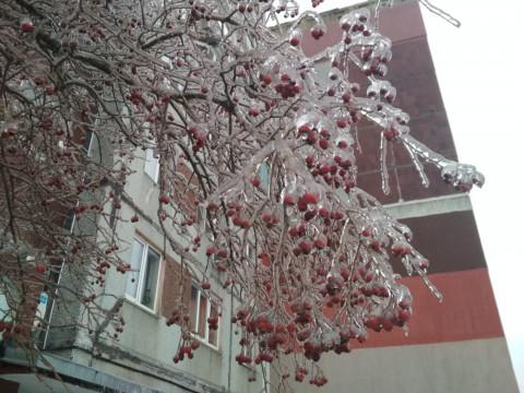 Борис Кубай рассказал, ждать ли нового ледяного шторма приморцам