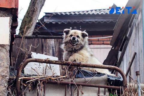 Агрессивные собаки терроризируют дальневосточников