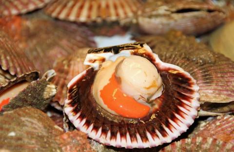 Ядовитые водоросли ищут в морепродуктах из Амурского залива