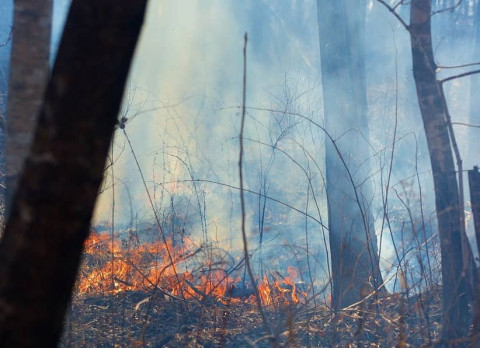 Губернатор объявил награду за информацию о поджигателях леса