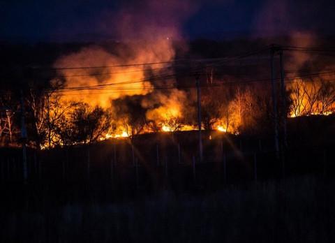За неделю в 46 регионах России потушили 443 лесных пожара