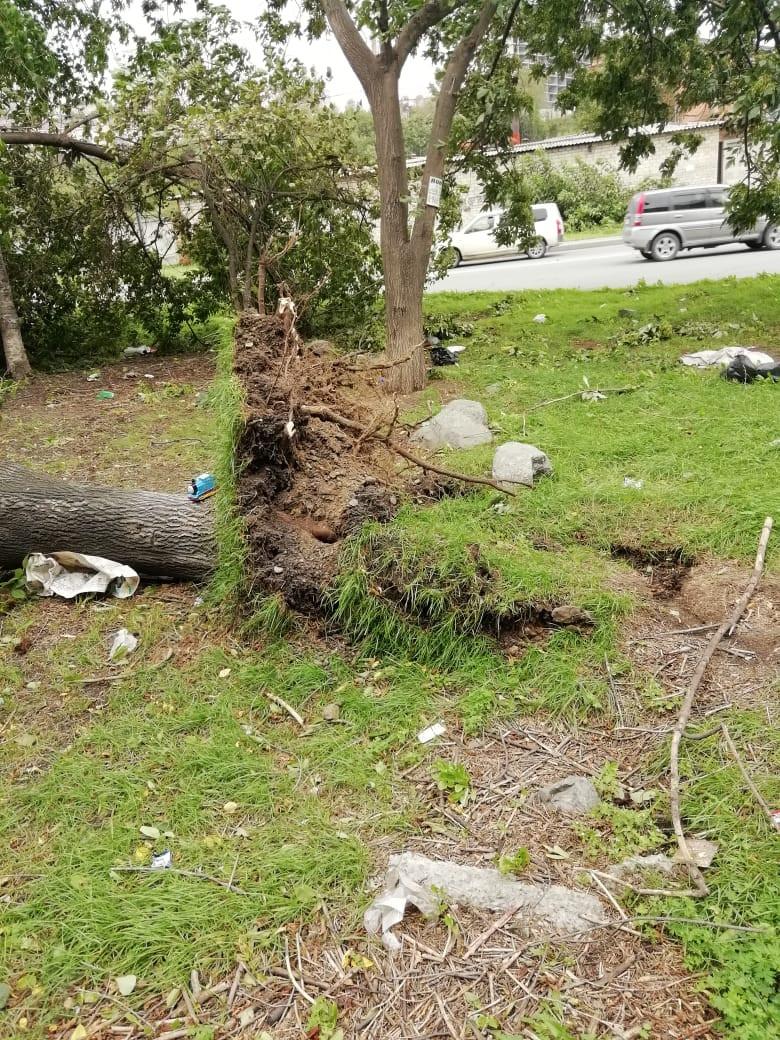 Приморье разгребает завалы после тайфуна