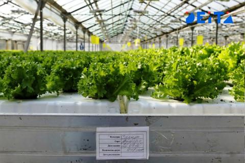 Кожемяко в тренде: дальневосточным фермерам пообещали новую льготу