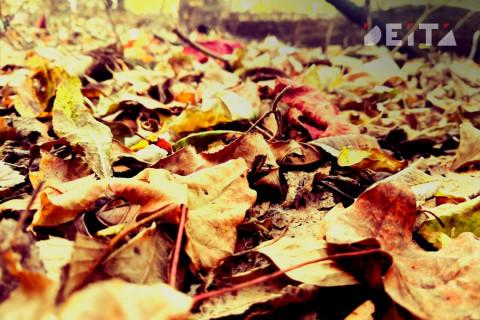 Россиянам рассказали, как законно убирать ветки и листья