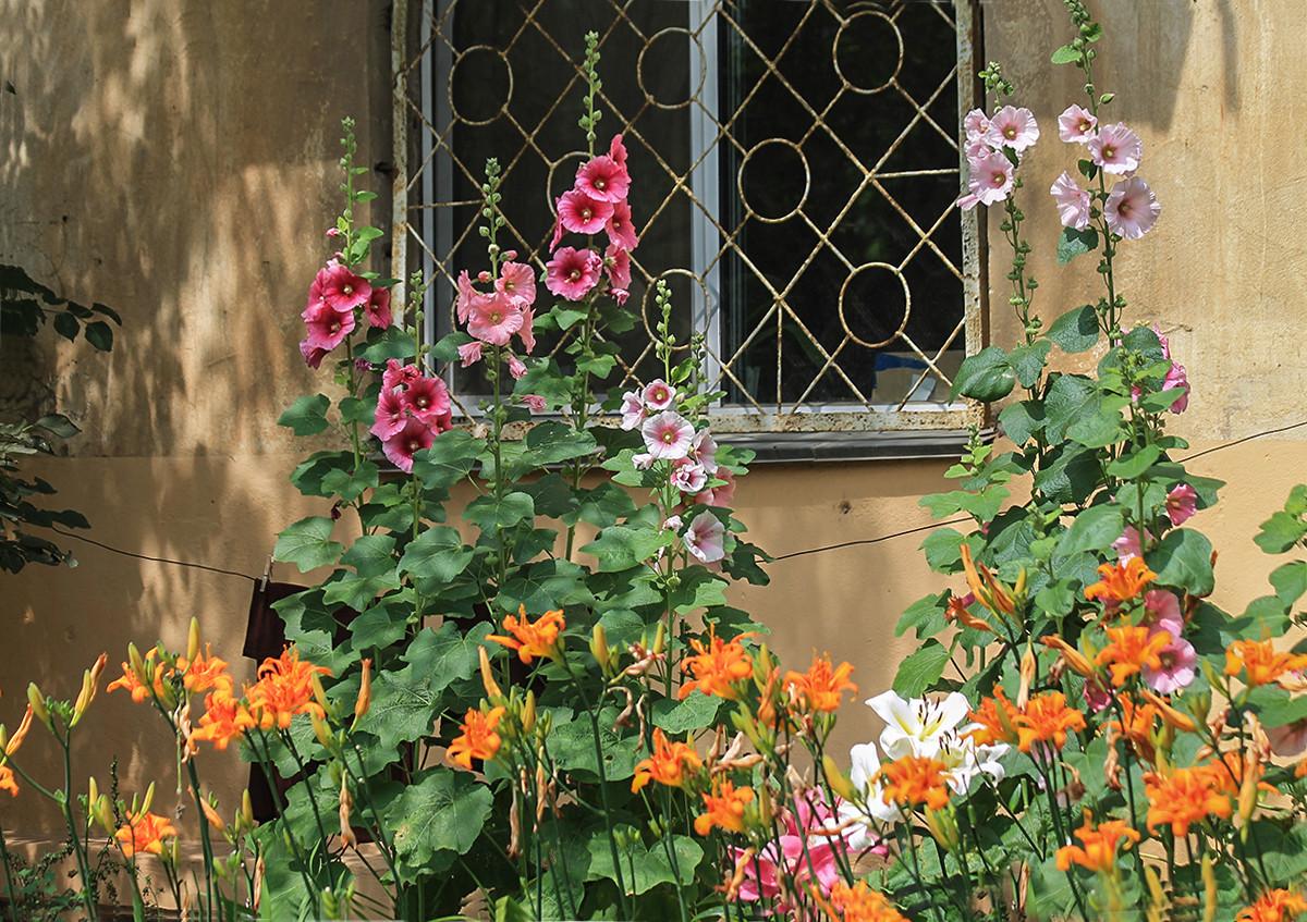 Хочешь красоты – возьми лопату. Городские цветы в фотопроекте «Негламурная столица Дальнего Востока»