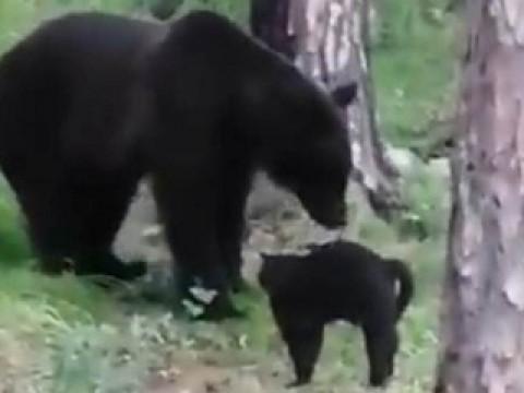 Отважный кот из ДФО защитил хозяев от медведя