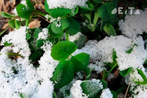 В Приморье придут заморозки