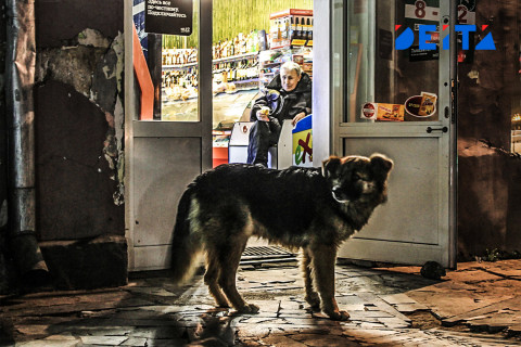 Собаки напали на детей на Камчатке
