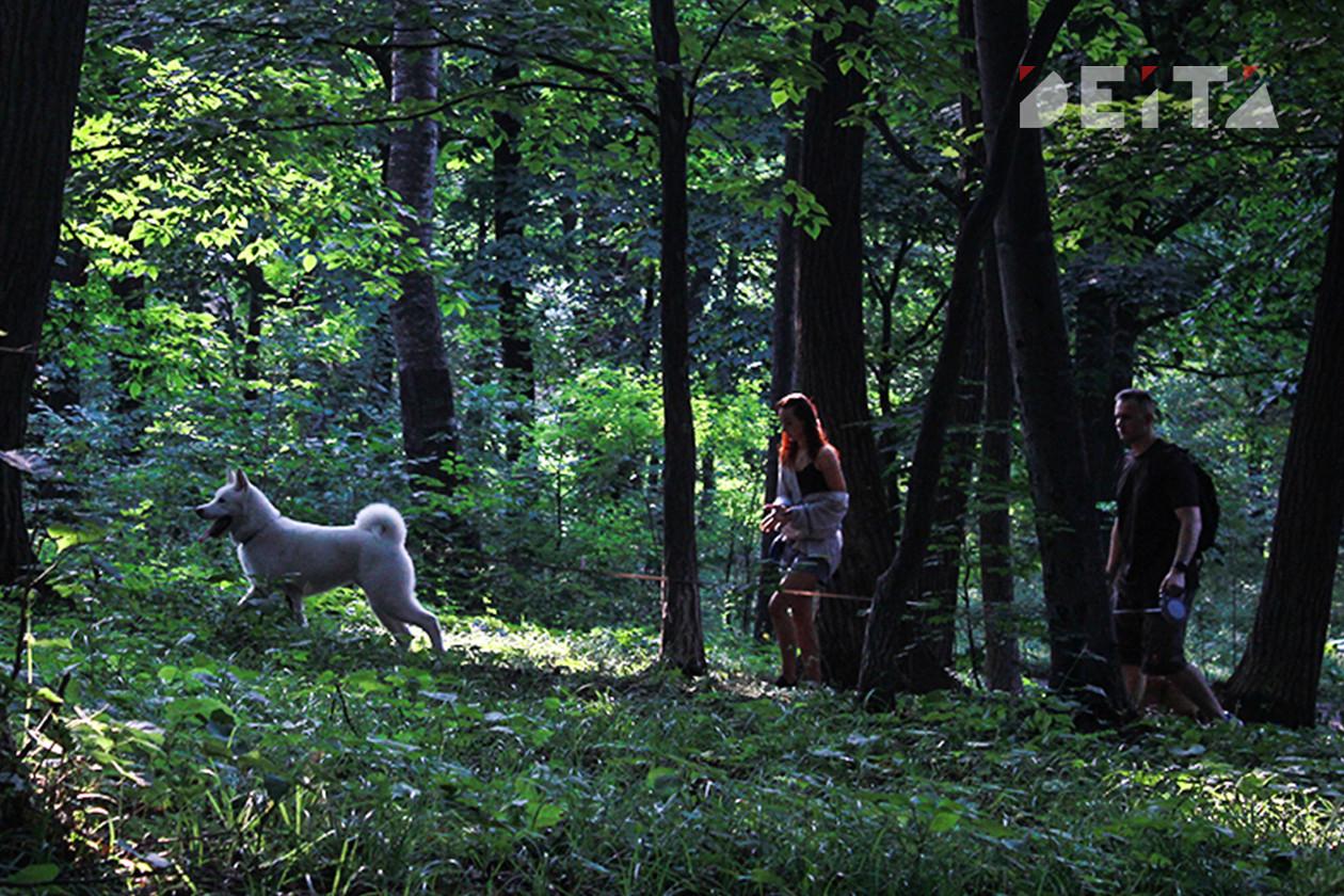 Кожемяко пообещал приюты и парки для собак всем районам Приморья