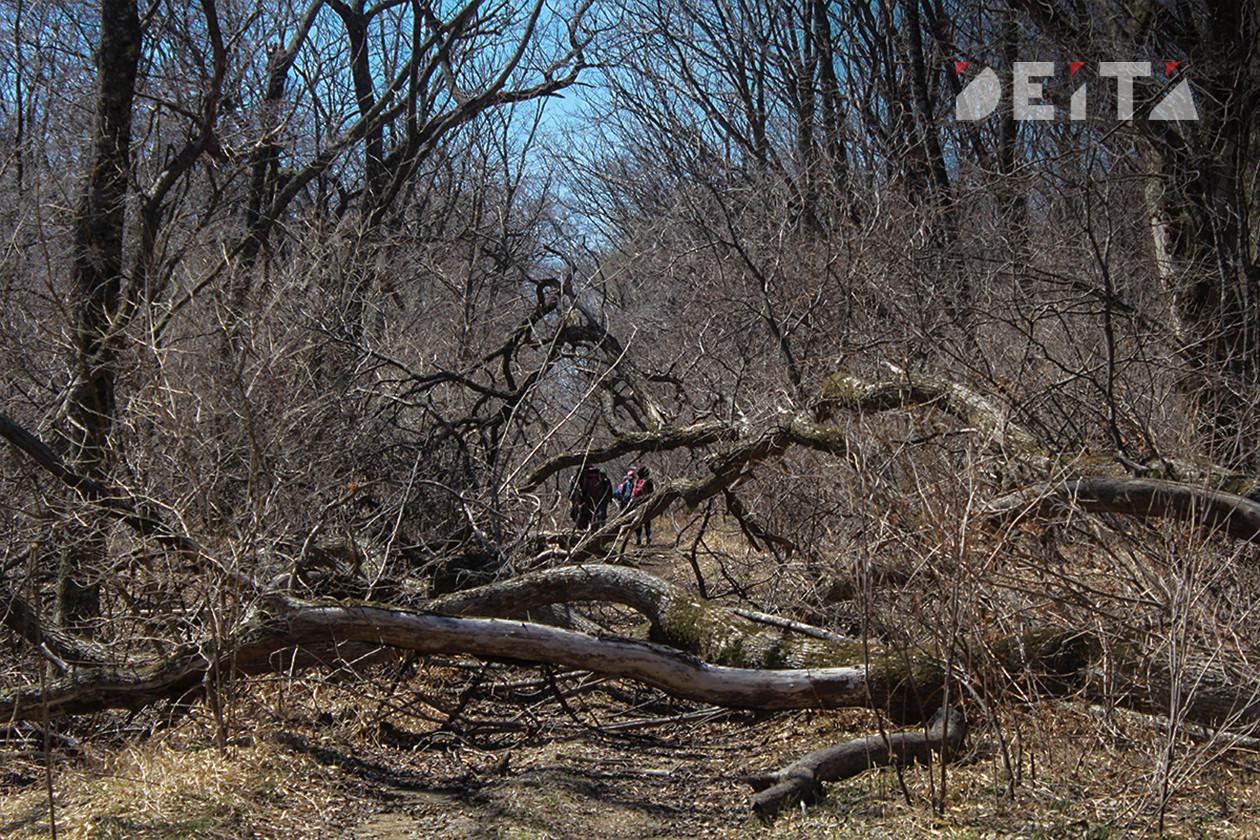 Владивостокцам запретили ходить в лес