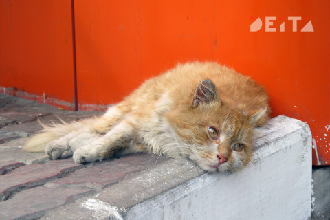 Женщина скончалась от царапин кошки