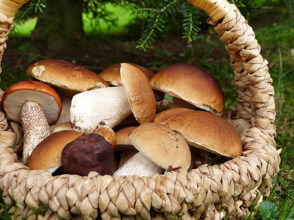 В Роспотребнадзоре предупредили о зараженной радиацией чернике и грибах