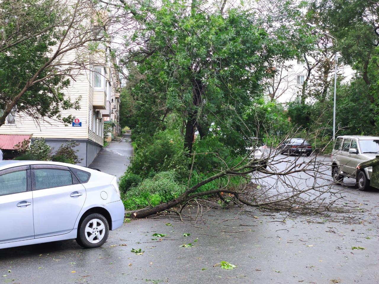 Ситуацию с устранением последствий тайфуна «Майсак» прояснили в Приморье