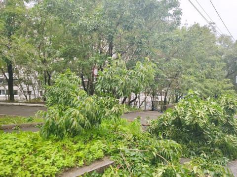 Уголовное дело по ликвидации последствий тайфуна возбудили в Приморье