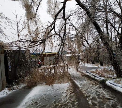 Ледяной шторм повредил почти 80% деревьев во Владивостоке