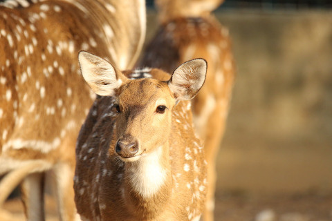 Жёсткое ДТП с оленем произошло в Приморье