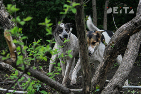 Бродячие собаки оккупировали детский сад во Владивостоке