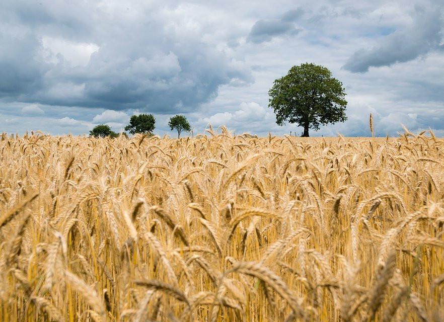 Сельхозпроизводители Приморья собрали почти 60 тысяч тонн зерна