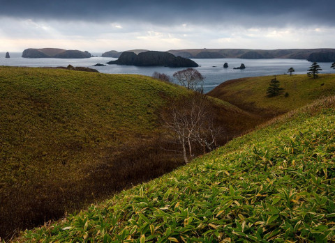 Мэрия  отрицает массовый выброс морских животных на побережье Северо-Курильска