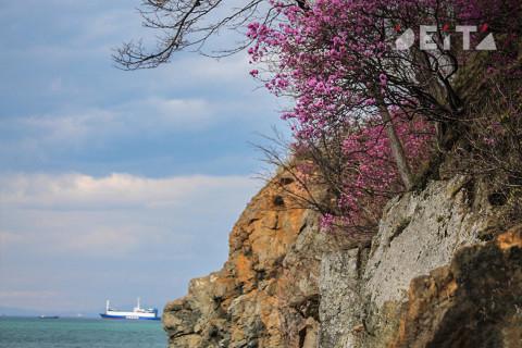 Остров Русский будут развивать вместе с корпорацией «Туризм.рф»