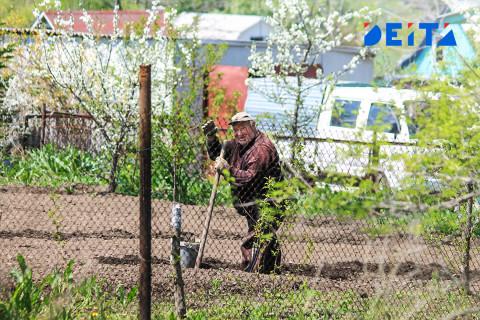 В России могут штрафовать за выращивание картошки