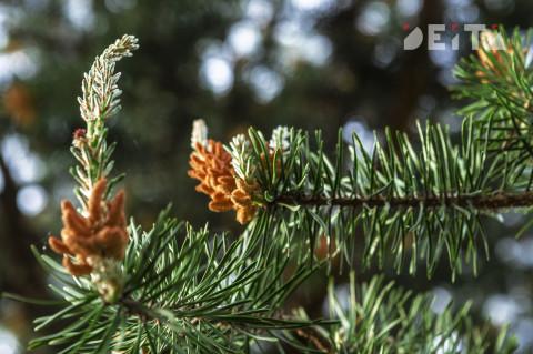 Переменчивая погода ждёт Приморье в ближайшую декаду марта