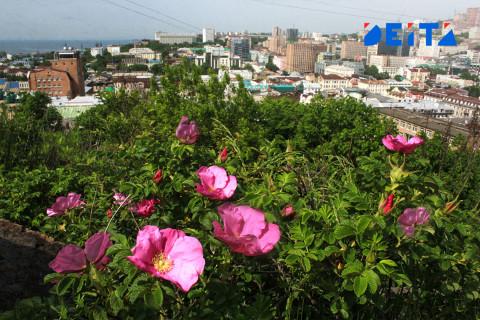 Деревья вместо стройки: зелёную зону удалось сохранить во Владивостоке