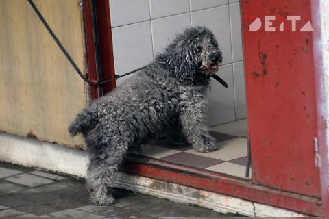 Ограничения на выгул животных вводят в России