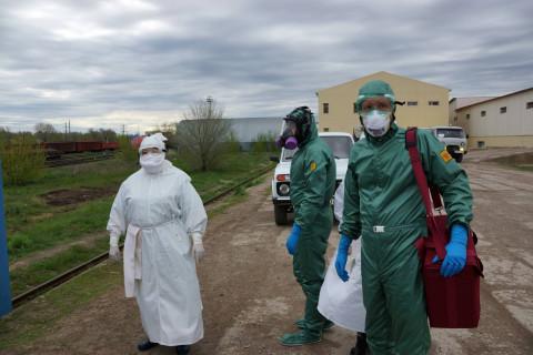 Очаг вируса африканской чумы найден в Приморье