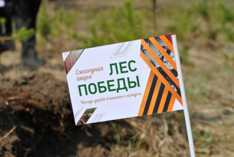 Приморцы смогут высадить «Лес Победы»