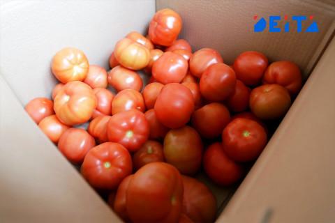 Урожай помидоров в Приморье увеличился в два раза