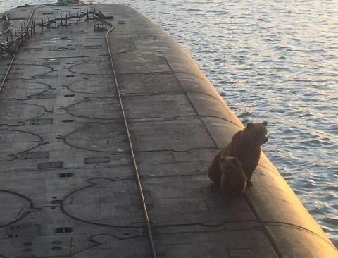 Медведица с медвежонком посетила подлодку на Камчатке: всё закончилось печально