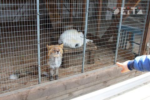 Владивостокцы травят обитателей зоопарка чипсами и конфетами