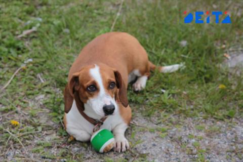 Россиян хотят штрафовать за выгул собак без намордников
