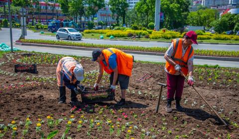 Новые цветочные композиции появились во Владивостоке по ряду улиц
