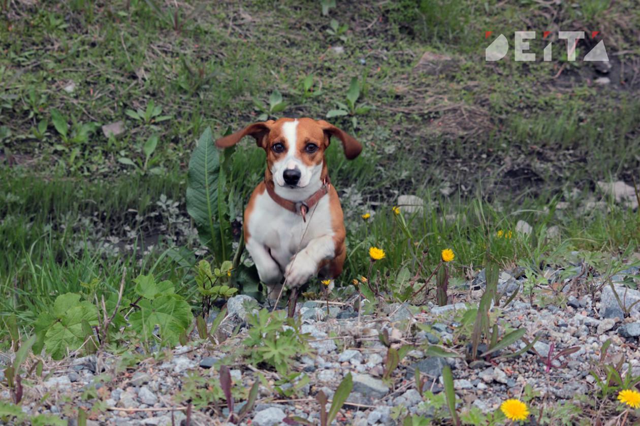 Приморского живодера будут судить за выброшенного с пятого этажа щенка
