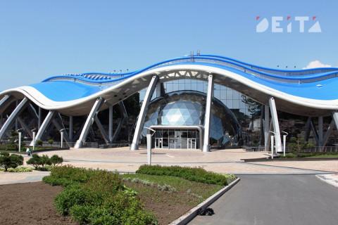 Директора Приморского океанариума отправили в СИЗО на два месяца