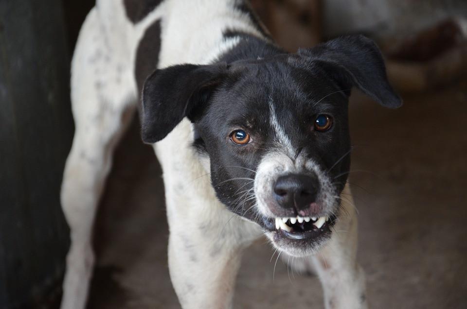 Свора бездомных псов терроризирует Владивосток