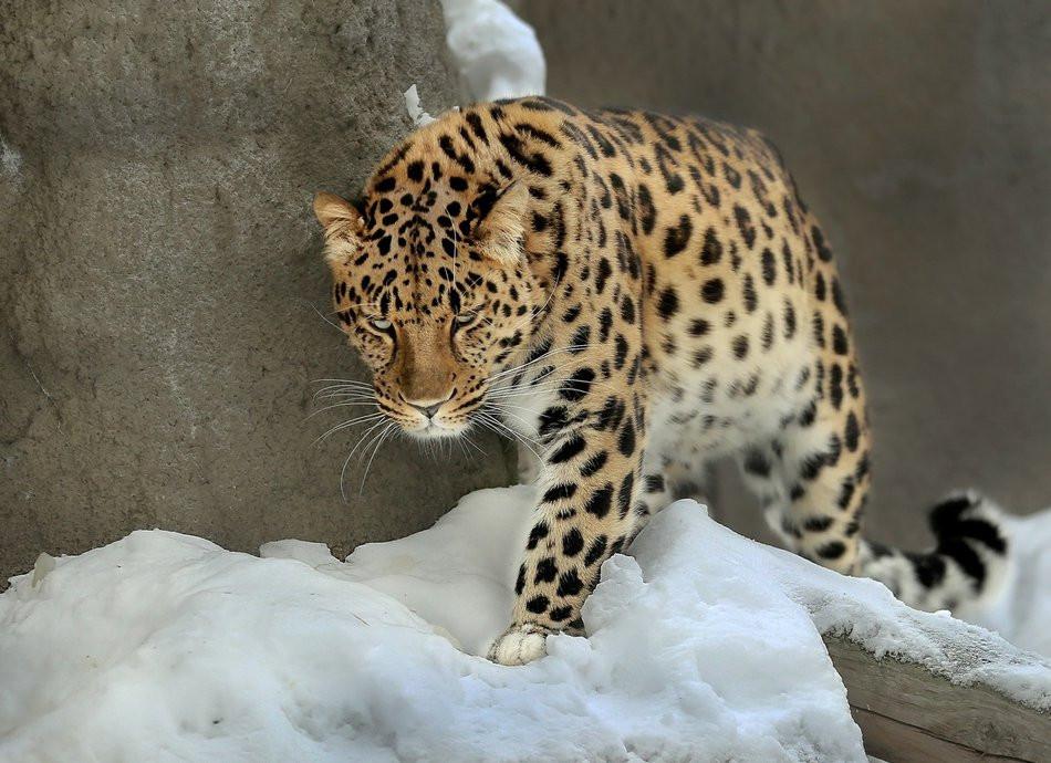 «Земля леопарда» станет точкой притяжения экотуризма