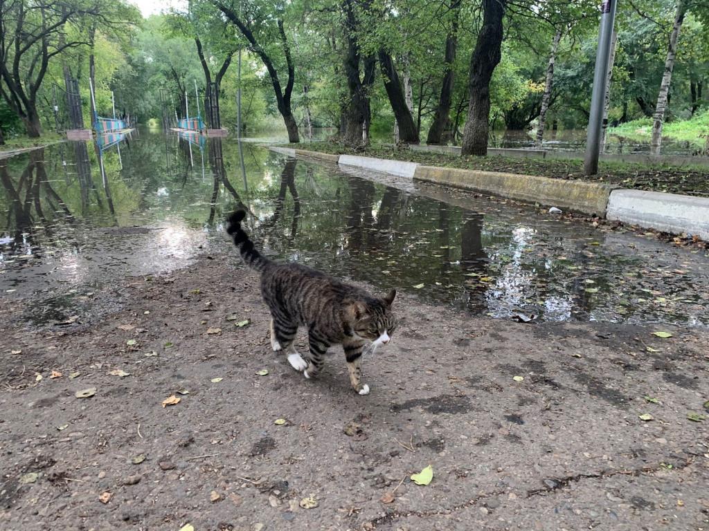 Коты покидают затопленный приморский парк