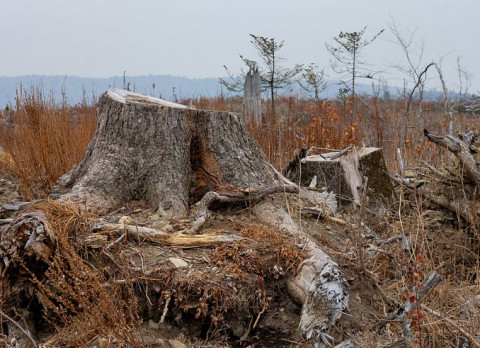 Российский лес огородят забором из десяти законов