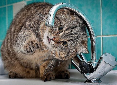 Массовое отключение холодной воды ожидается во Владивостоке во вторник