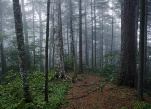 Омский министр рассказал о своих лесных приключениях