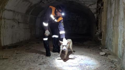 В Приморье спасли собаку из форта № 9
