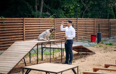 Пять новых парков для выгула собак появятся во Владивостоке