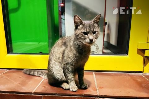 Пояснить не смог, но видел: в России кот стал свидетелем преступления