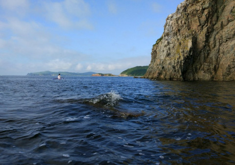 Отравление воды на Камчатке связали с токсичными водорослями