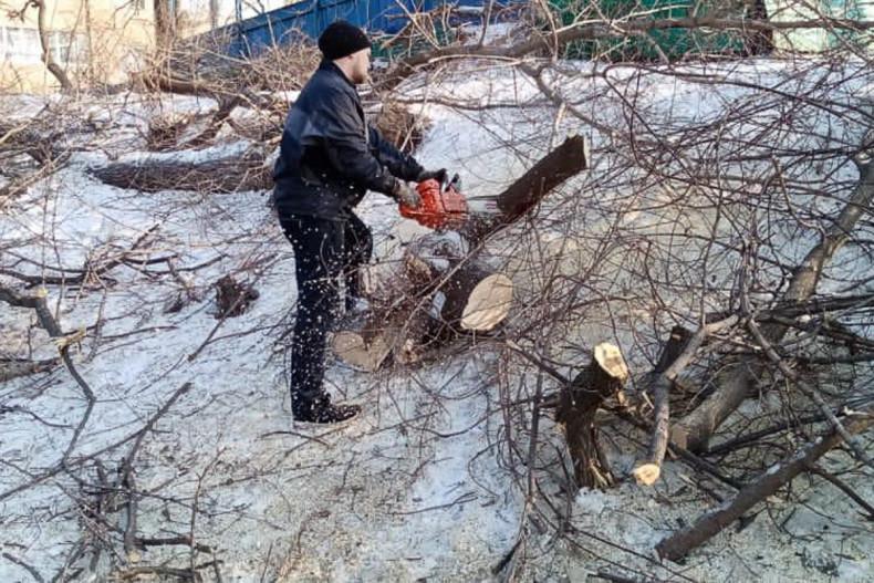 Более 500 тонн веток вывезли с улиц Владивостока